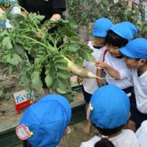 子ども達が育て給食で食べます
